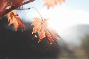 Feeling sad in Autumn
